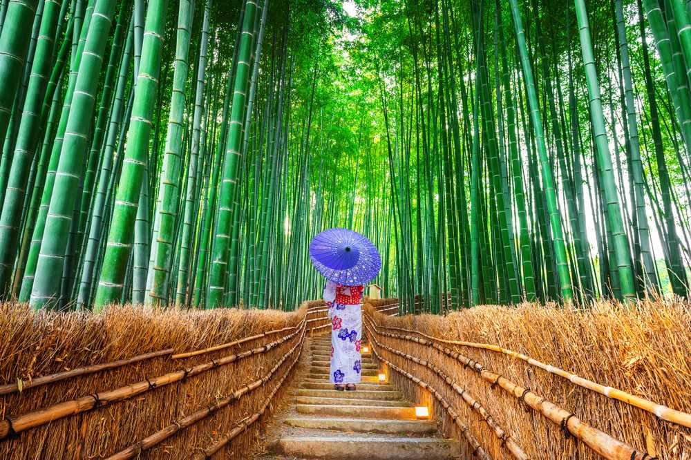 Forêt de bambous à Arashiyama