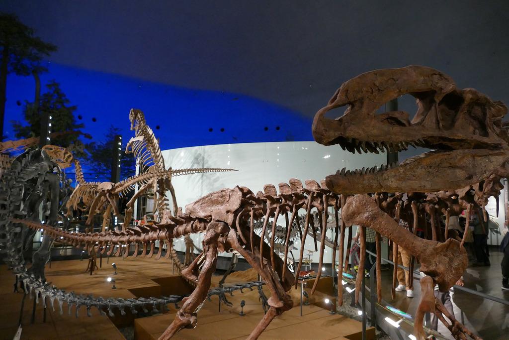Le Musée des Dinosaures de Fukui