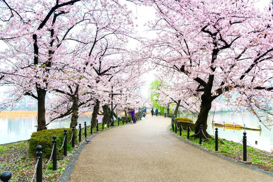 Le parc Ueno