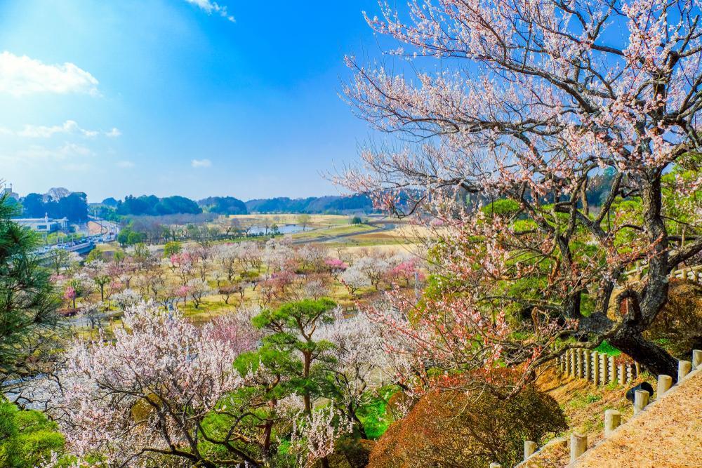 Le jardin Kairaku-en (Mito, Ibaraki)