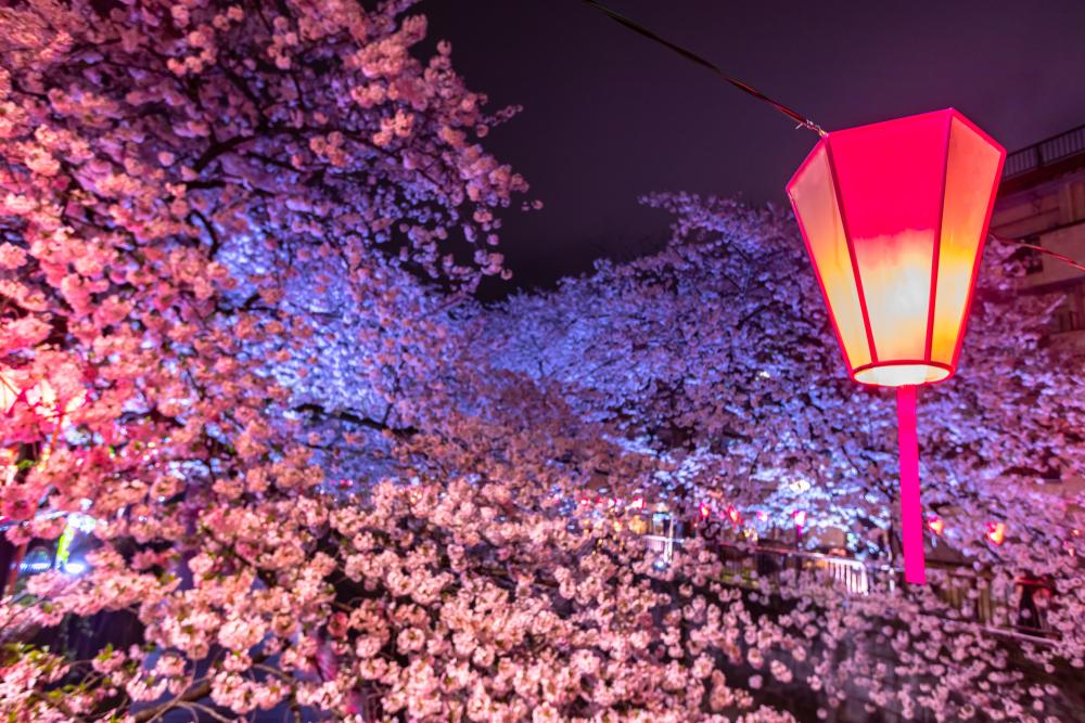 Le parc de Ueno (Tokyo)