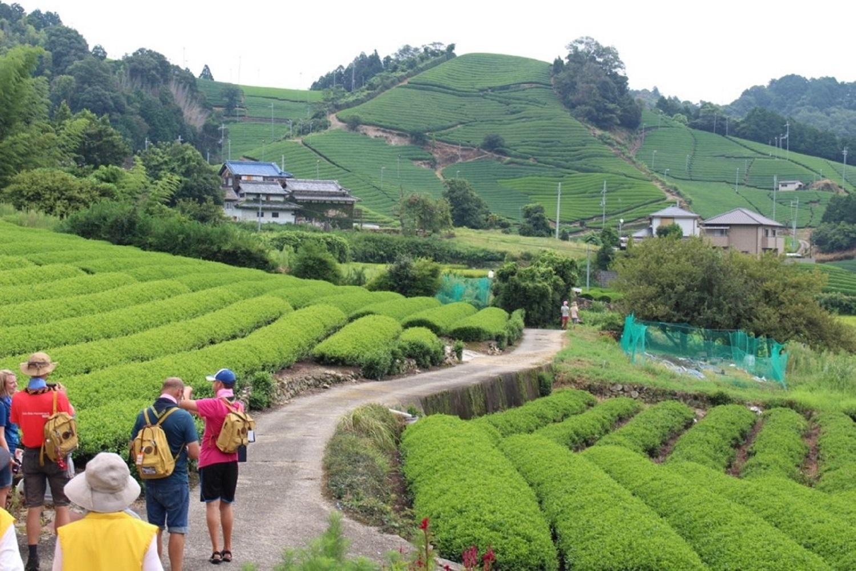 Partir à la découverte du thé vert au sud de Kyoto
