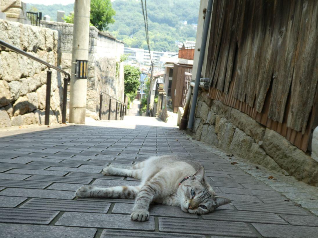 A cat in Onomichi
