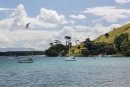 【RYAヨットスクール】 ニュージーランドでヨット(スキッパー)の資格を取得!