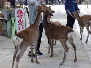 なぜ奈良には鹿がいるのか?