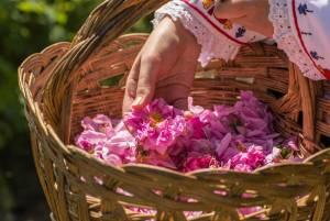 ブルガリアのバラ祭り2019【ブルガリア情報】