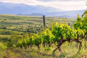 世界的に有名なメルニックの赤ワイン!【ブルガリア情報】