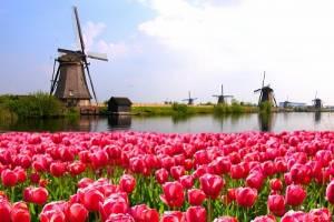 オランダイベントカレンダー【2020年上半期】