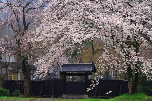 Sur la trace des Samouraïs de Kakunodate (Akita)