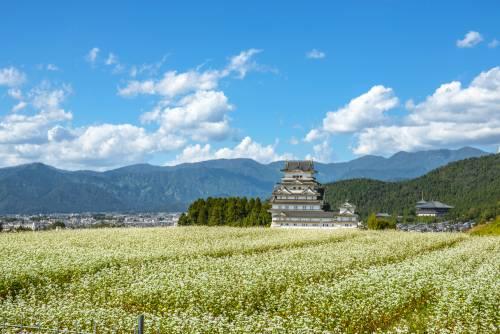 Méditer au coeur du Japon Zen dans la région de Fukui