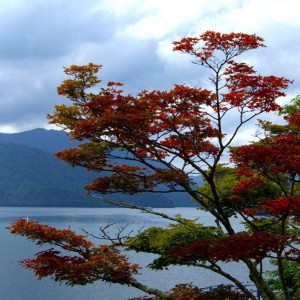 NOVEMBRE 2012: Top 6 des excursions au Japon
