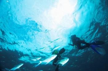 Diving & Trekking