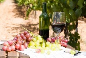 パリにもブドウ畑が!モンマルトルのブドウ収穫祭