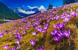 【専用車】スロヴァキアの自然 山岳の四季折々の魅力8日間