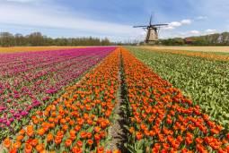 船と自転車でまわる、春のオランダ・サイクリングツアー 7日間 ~チューリップ・風車~