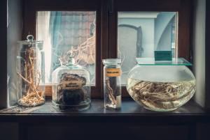 ラトヴィアの製薬と医療の歴史を学ぶ【ラトヴィア情報】