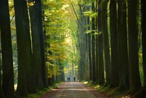 ベルギーの世界自然遺産 ソワーニュの森