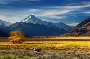ニュージーランド航空 お得な早割り航空券販売中