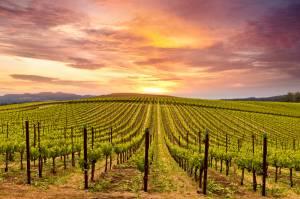 カリフォルニアワイン@サンフランシスコ