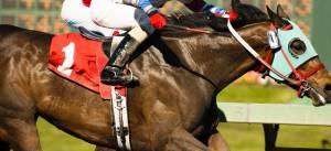 フランス人が日本馬が凱旋門賞に参加する喜びそうです