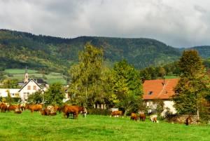 フランス観光を楽しもう!地方を巡る旅シリーズ●オーヴェルニュ地方●グルメ・チーズ編
