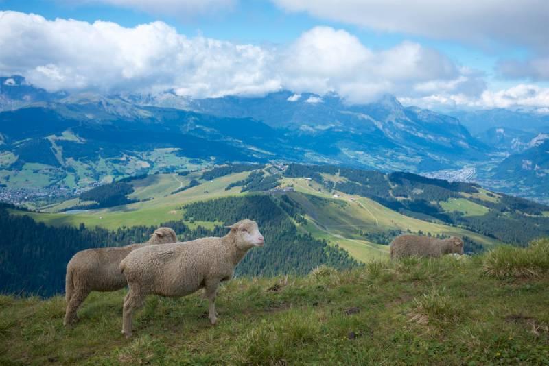 フランスに羊飼いの営みをたずねて