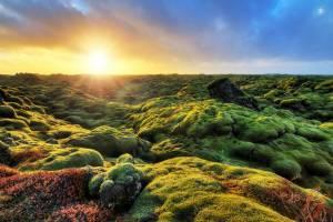 苔のモコモコの迷宮をさまよう:エルドフロイン【アイスランド情報】