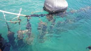 クロアチア、平牡蠣の養殖で有名なんです。