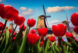 ロマンチックドイツ&春のオランダ紀行 7日間