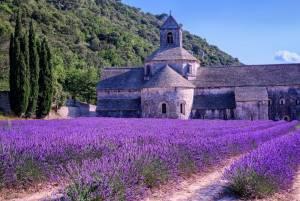 感動体験フランスハネムーン☆彡南仏のラベンダー畑