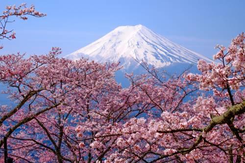Les festivals printaniers de la région de Yamanashi