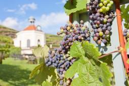 【ドイツワインの旅 / ドレスデン発着】ドレスデンでワインショップを営むワイン専門家がご案内!ザクセン地域で最古のスパークリングワイン醸造所見学ツアー 半日