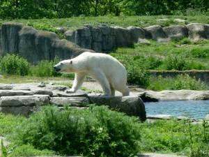 ブライドープ動物園の自然の中で