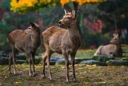 Le plein d'activités au Japon - Kyôto et Nara