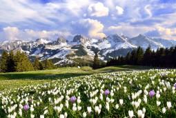 大自然に抱かれる極上の時間 花とハイキング