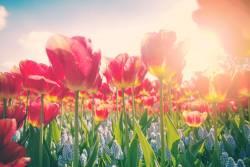 春のオランダ&ベルギー