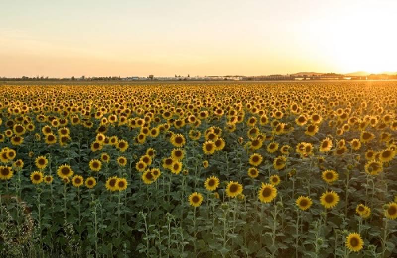 ゴッホが追い求めた南仏の風景