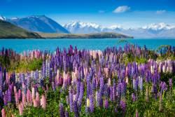 ニュージーランド世界遺産の旅