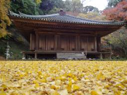The relaxing autumn tour in Nishiseto region