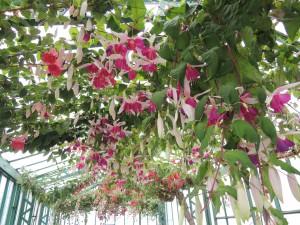 ラーケン王宮の温室 一般公開は毎年4月中旬~5月上旬頃!