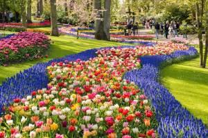 キューケンホフ公園  3月から5月に限定開園