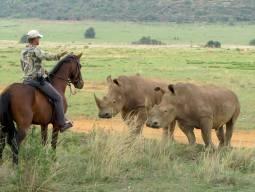 2月~12月(毎月2回開催)【南アフリカ】 乗馬しながら出会う野生動物、ビッグ5乗馬サファリ!