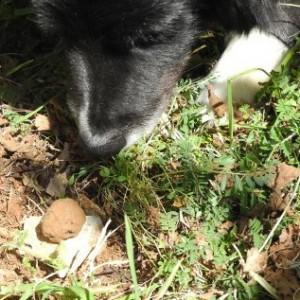 農園でトリュフ狩りも!トリュフを満喫する4日間の旅