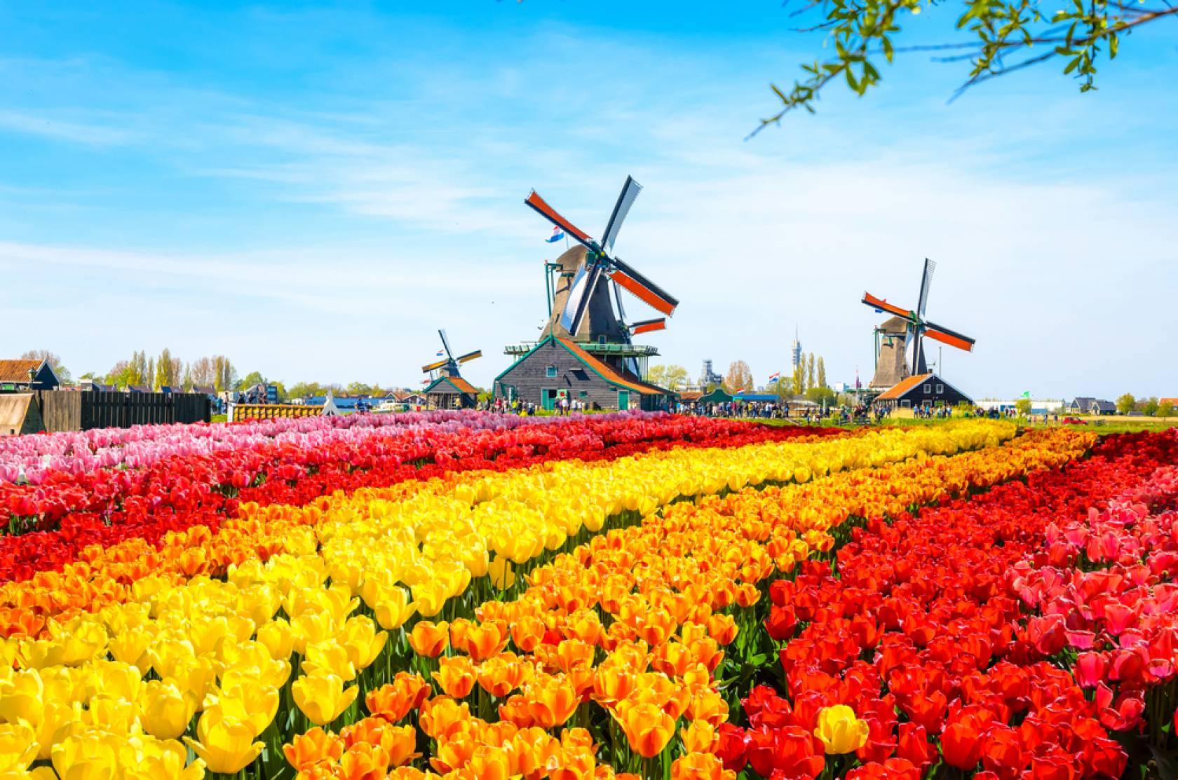 ベルギーとオランダ 2カ国周遊ツ...