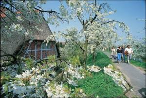 りんごの花が咲いたら春本番!アルテスラントへ出かけよう