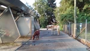 出先で見かけたクロアチアの動物達・パート1
