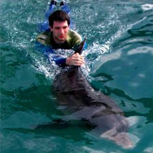 Nager avec les dauphins au japon for Nager avec les dauphins nice