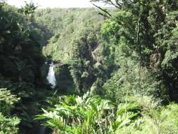 ハワイ島 1日観光 チャーター (貸切観光 北回り)