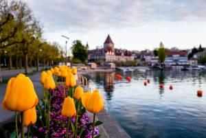 レマン湖の花「モルジュ Morges」