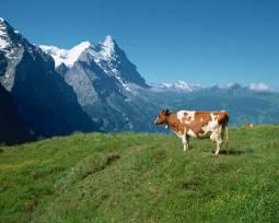 美しいスイスへ!ハネムーン8日間★専用車付き★